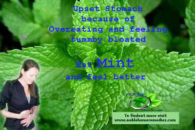 Eat Mint for an Upset Stomach caused by overeating and bloated tummy