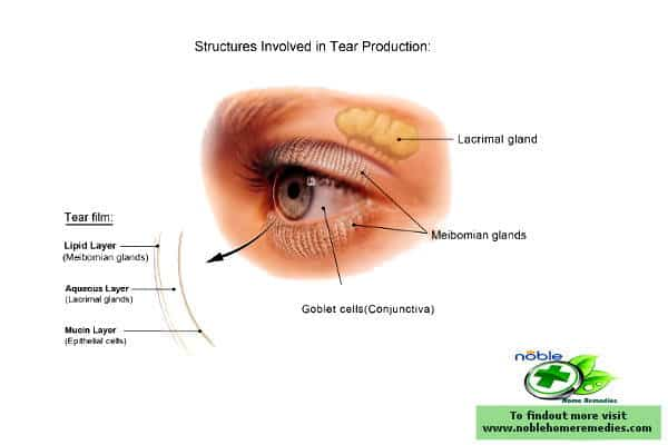 Eyes tear production structure