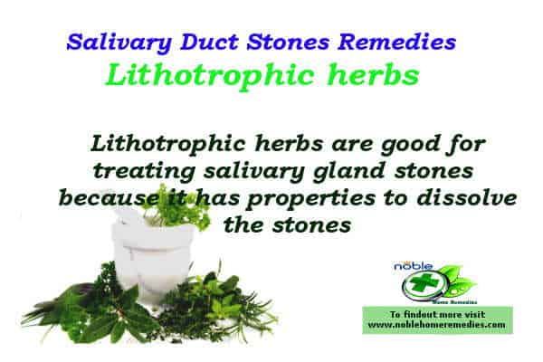 Lithotrophic herbs - Salivary Duct Stones Home Remedies - Sialolithiasis