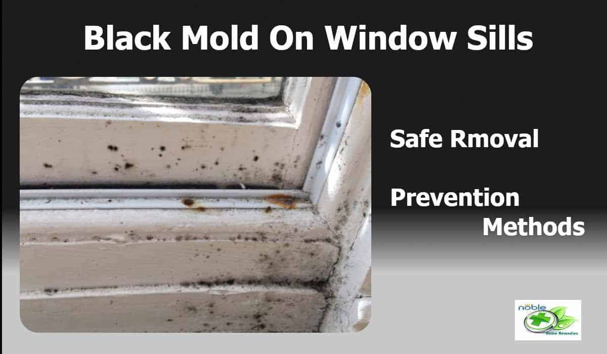 Black mold growth on window sills