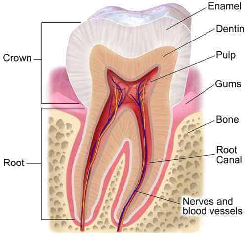 the best natural pain relief for toothache - ToothAnatomy