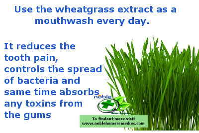 the best natural pain relief for toothache - wheatgrass