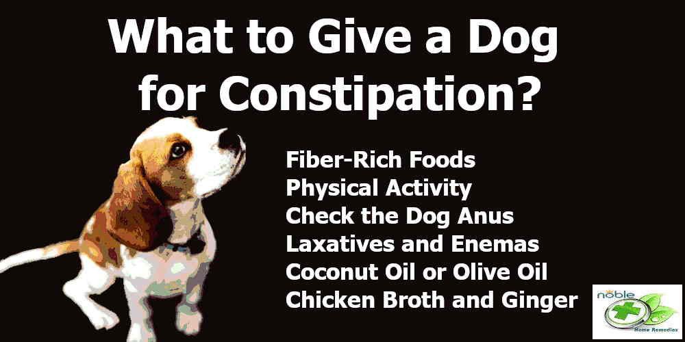 what to give a dog for constipation - canned pumpkin fiber rich food
